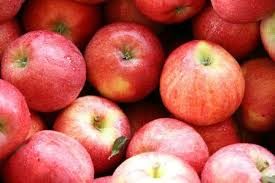 Apple Shimla