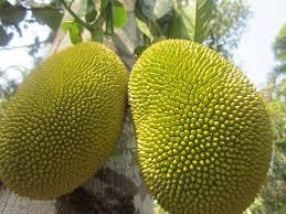 Jackfruit - Kathal