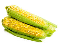 Sweet Corn - American Bhutte