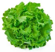 H leafy lettuce