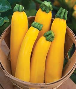 Zuccichini Yellow